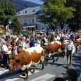 Heimatverbunden im Salzburgerland